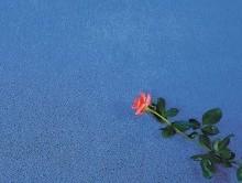 EXCELSİOR GECE MAVİSİ | Duvardan Duvara Halı